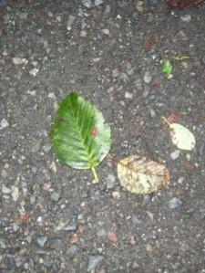 Green leaf R