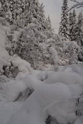 The trail was clogged with snowy alder. Tromp, tromp, shake shake shake.